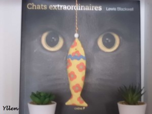 poisson chat d'yllen